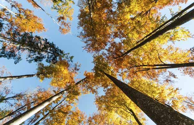 Hotels Bayerischer Wald Gunstig Buchen Its